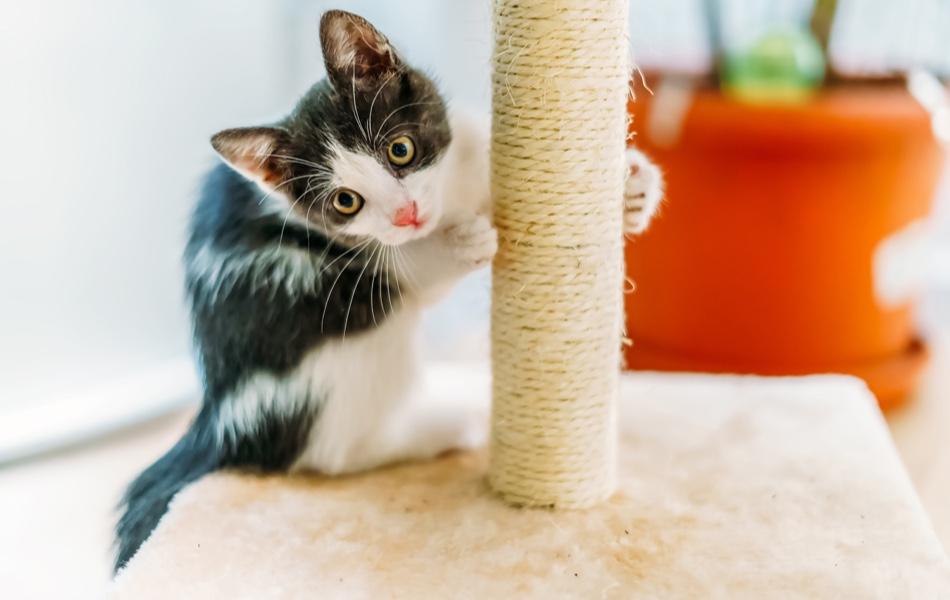 Nie je to žiadna hračka, keď do domu pribudne mačka