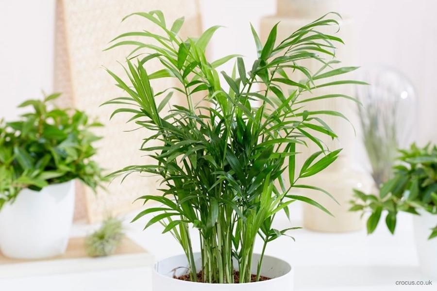 S vlhkosťou v byte vám pomôžu tieto rastliny